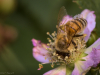 2020_06_18_Bees_and_Bugs_1881
