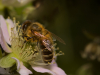 2020_06_18_Bees_and_Bugs_1891